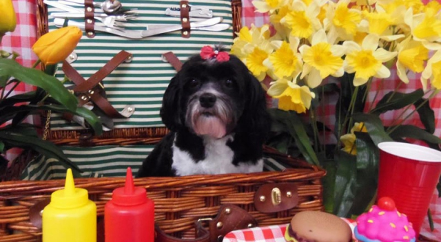 black white dog basket flowers terrier
