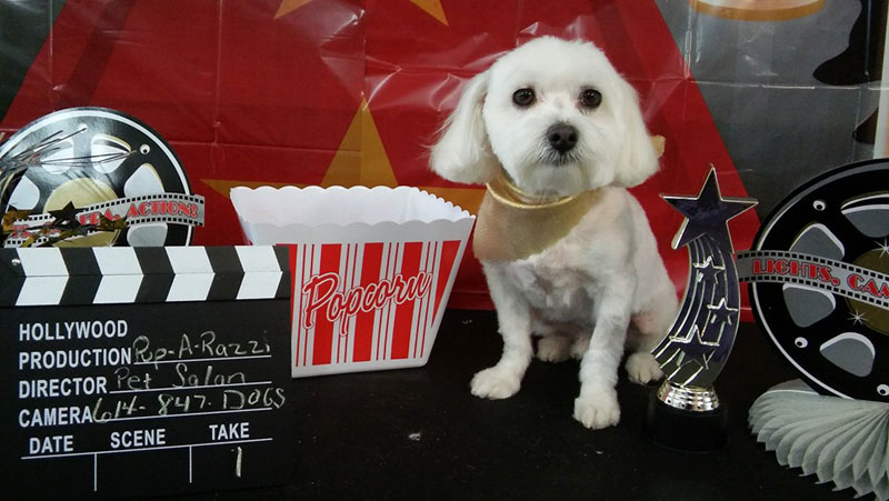 terrier white popcorn hollywood movie dog