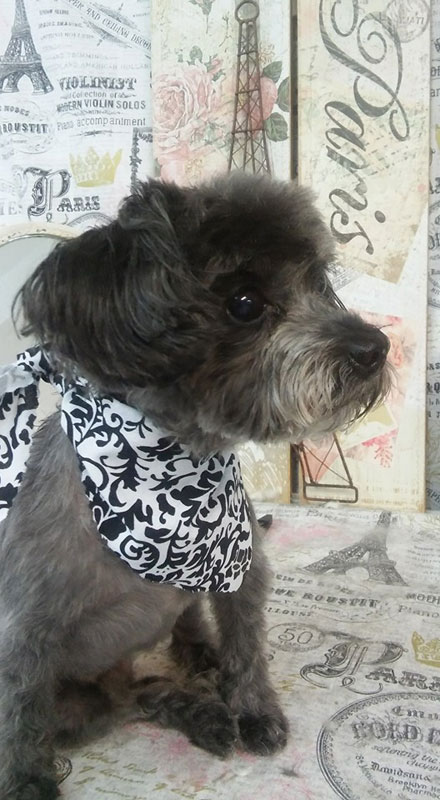 black terrier russel handkerchief